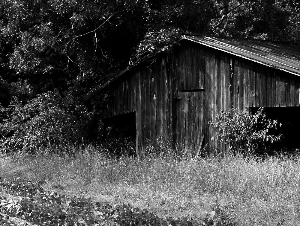 Abandoned Barn by Karen Harrison