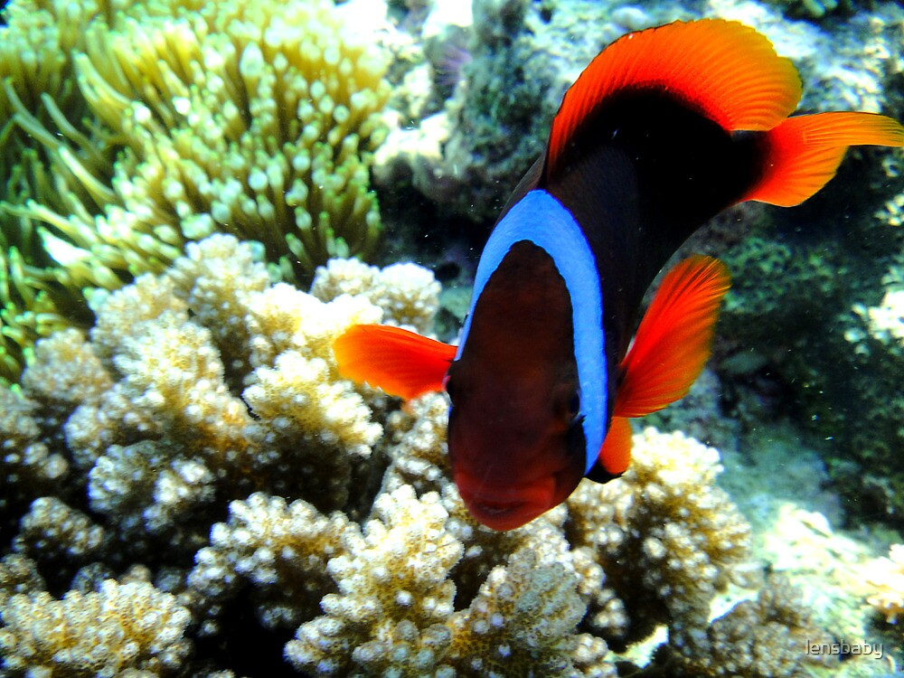 coral fish by lensbaby