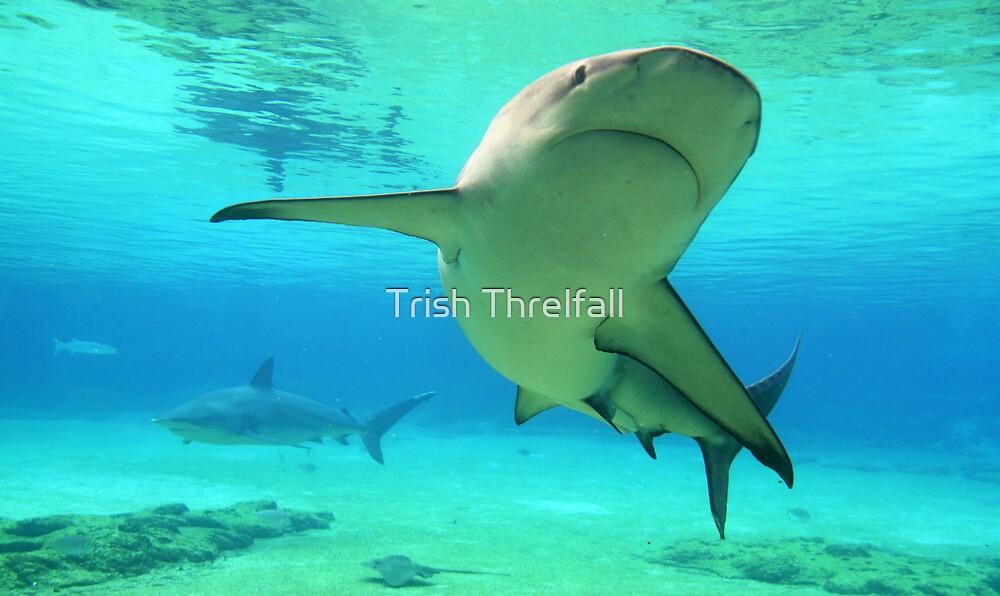 walk on the wild side  by Trish Threlfall
