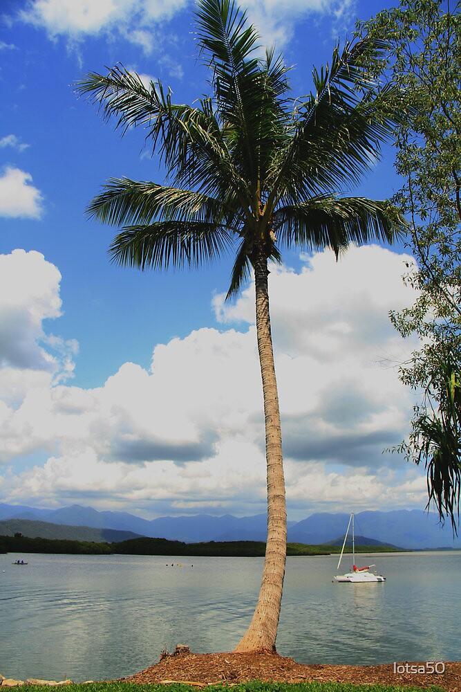 palm  by lotsa50