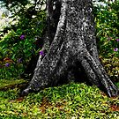 Tree Trunk and Purple Flowers by mrfriendly