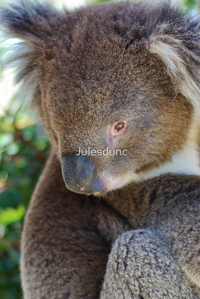 koala by Julesdunc