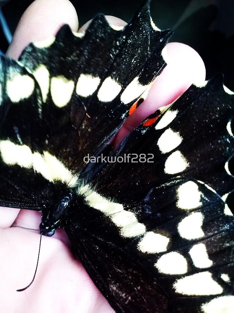 Swallowtail Butterfly by darkwolf282