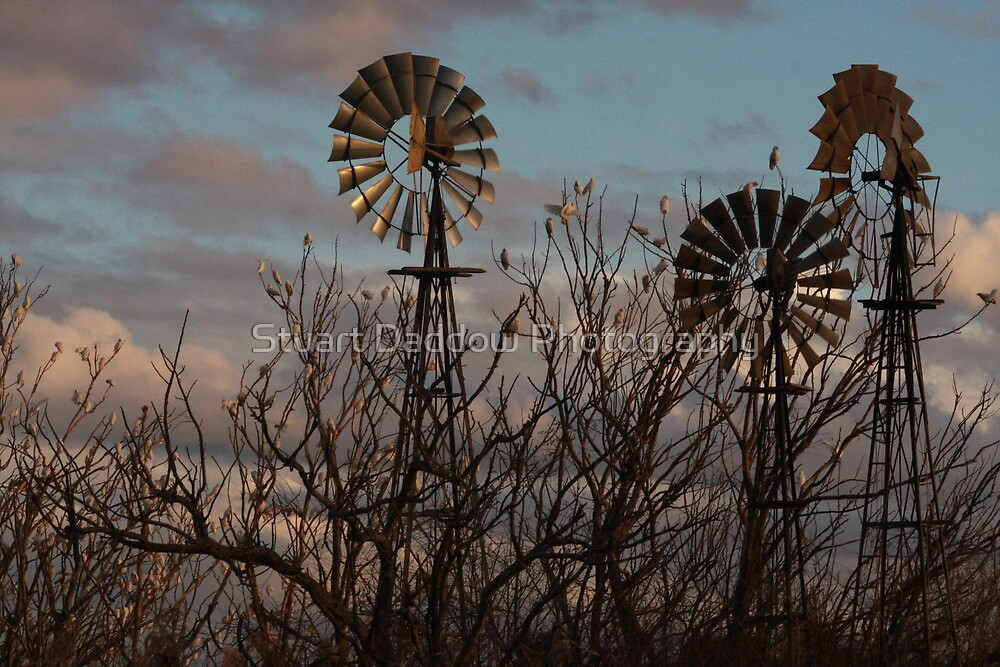 Windmills and Cockatoos Pt.2 by Stuart Daddow Photography