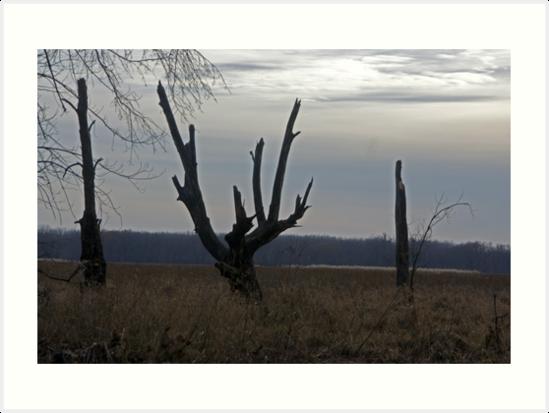 Lonely Tree by Tina Hailey