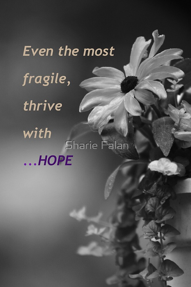 fragility and hope by Sharie Falan