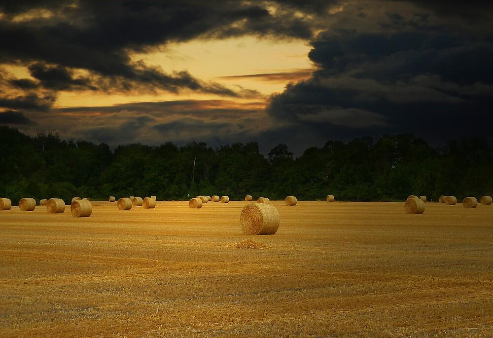 Rolls of hay by sunshine65