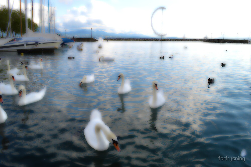 Swans in Switzerland by forfrysning