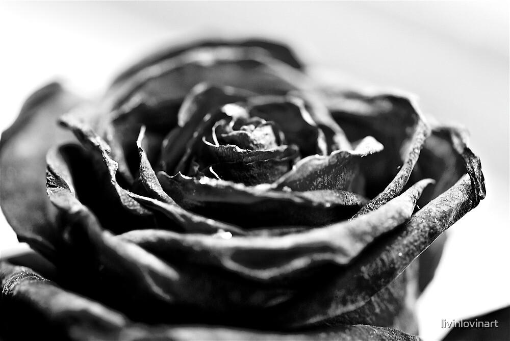 Dying Rose by livinlovinart