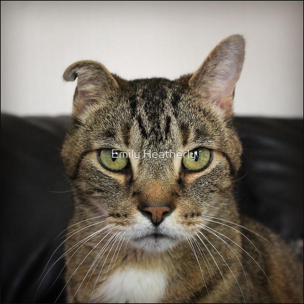 Cat Portrait by Emily Heatherly