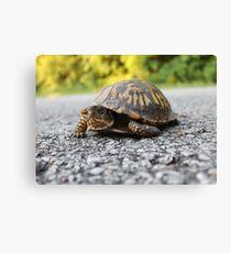Mr. Turtle Reptile Canvas Print