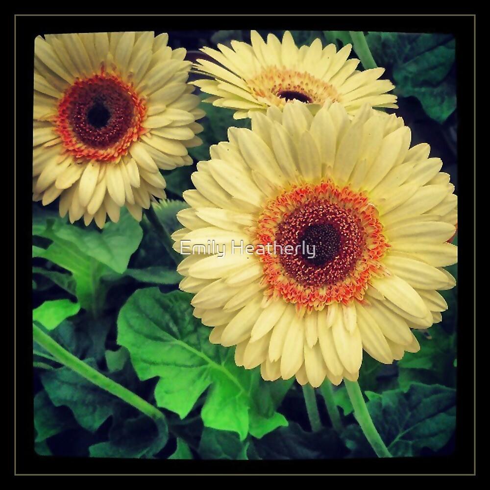 Yellow and Orange Flowers by Emily Heatherly