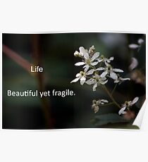 Life, beautiful yet fragile Poster
