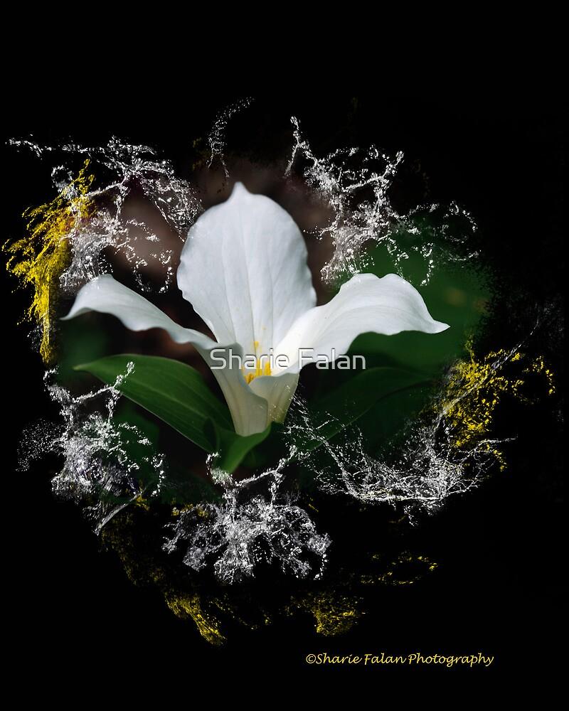 Splash by Sharie Falan