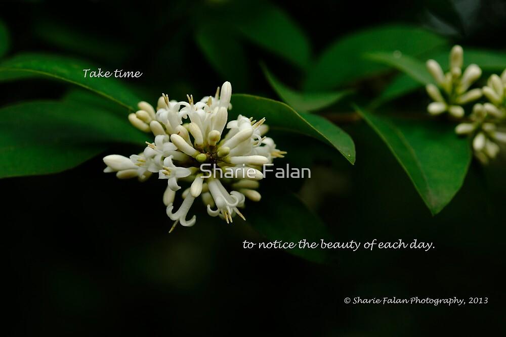Take time by Sharie Falan