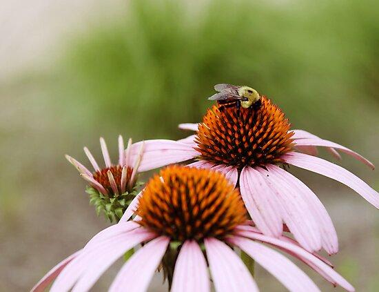 Bee Love by DSVK