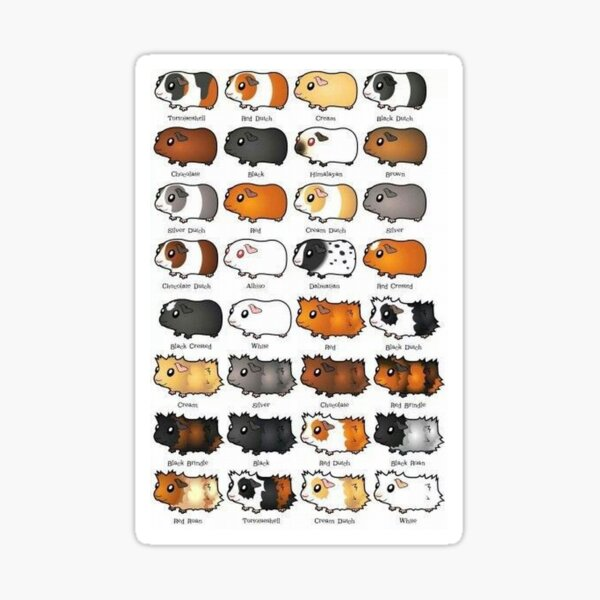 Guinea Pig – Cavy Collection – Model 08 Sticker