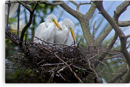 Mom's Watching by Robert H Carney