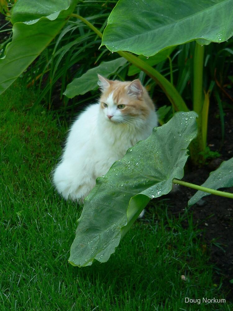 Shy Kitty ! by Doug Norkum