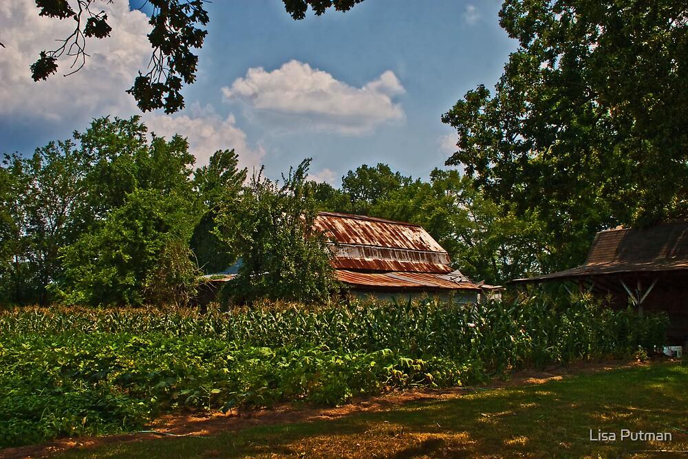 Rusty Barn with Corn  by Lisa Putman
