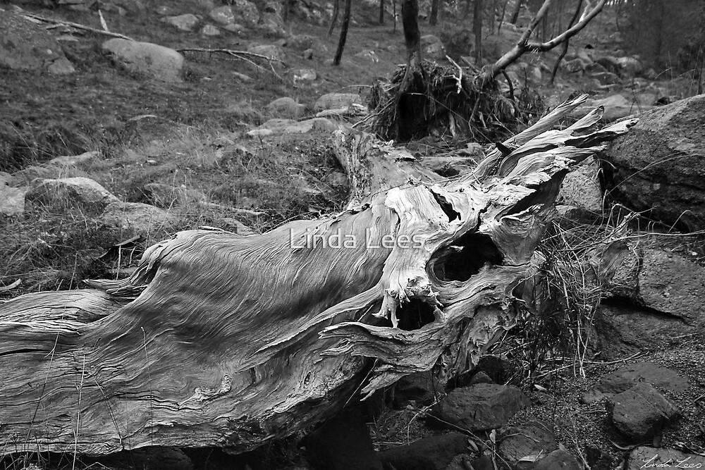Nature's Sculpture by Linda Lees