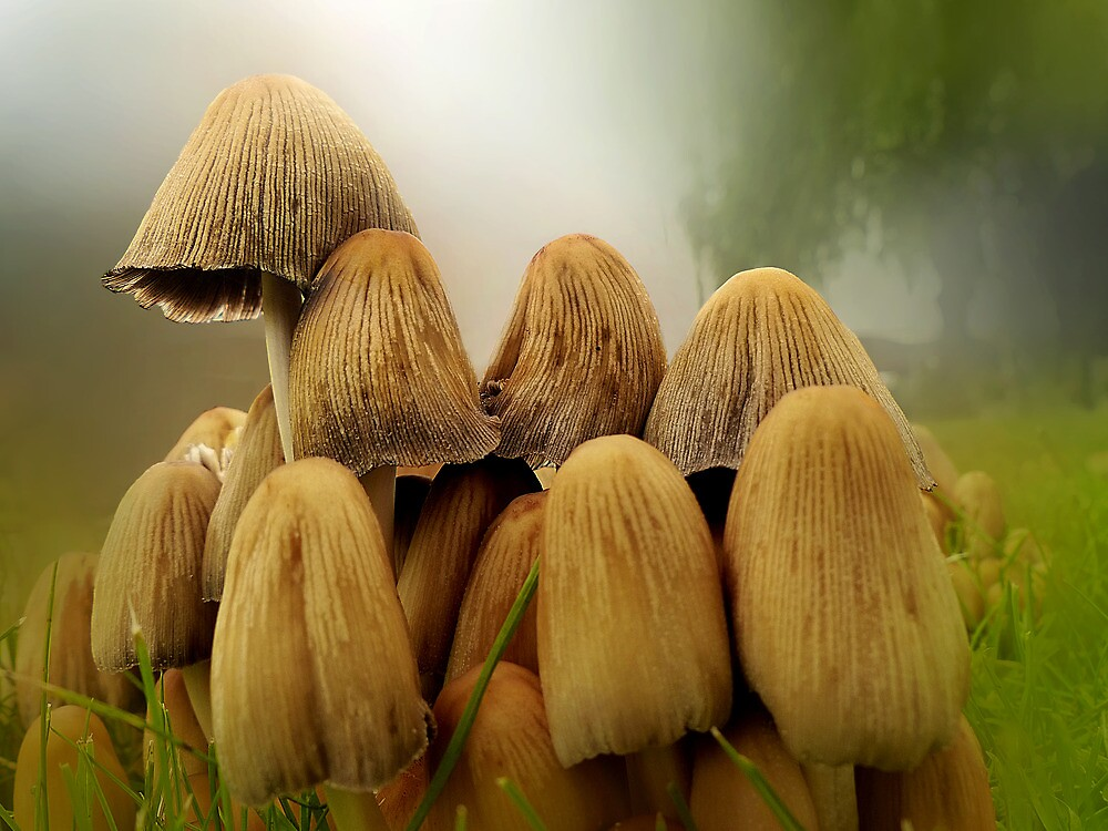 Fungus Family by sunshine65