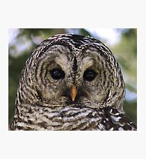 A Curious Stare Photographic Print
