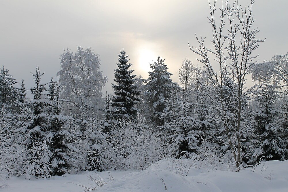 Winter forest. Elverum, Norway. by UpNorthPhoto