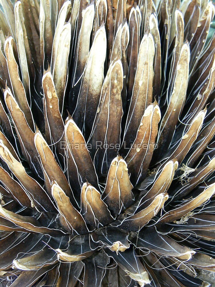 Desert Landscape by Briana Rose Lucero
