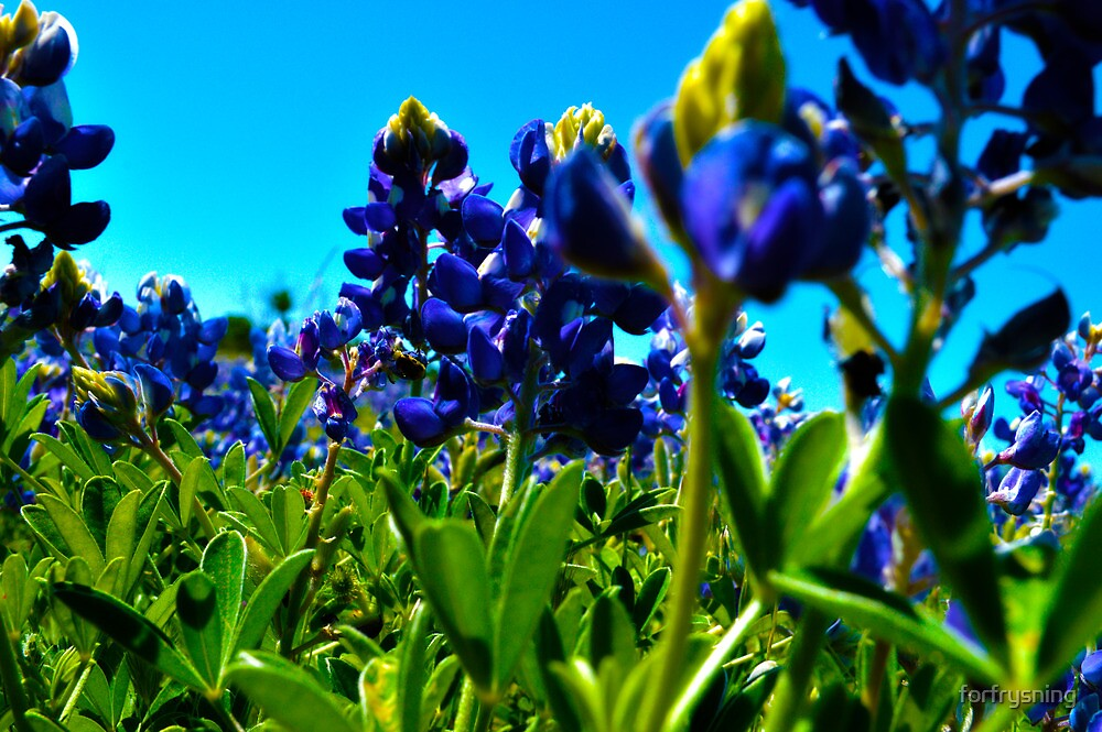 Blue Flowers by forfrysning