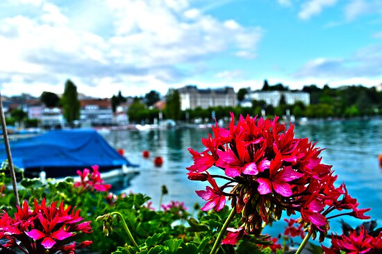 Flowers in Switzerland by forfrysning