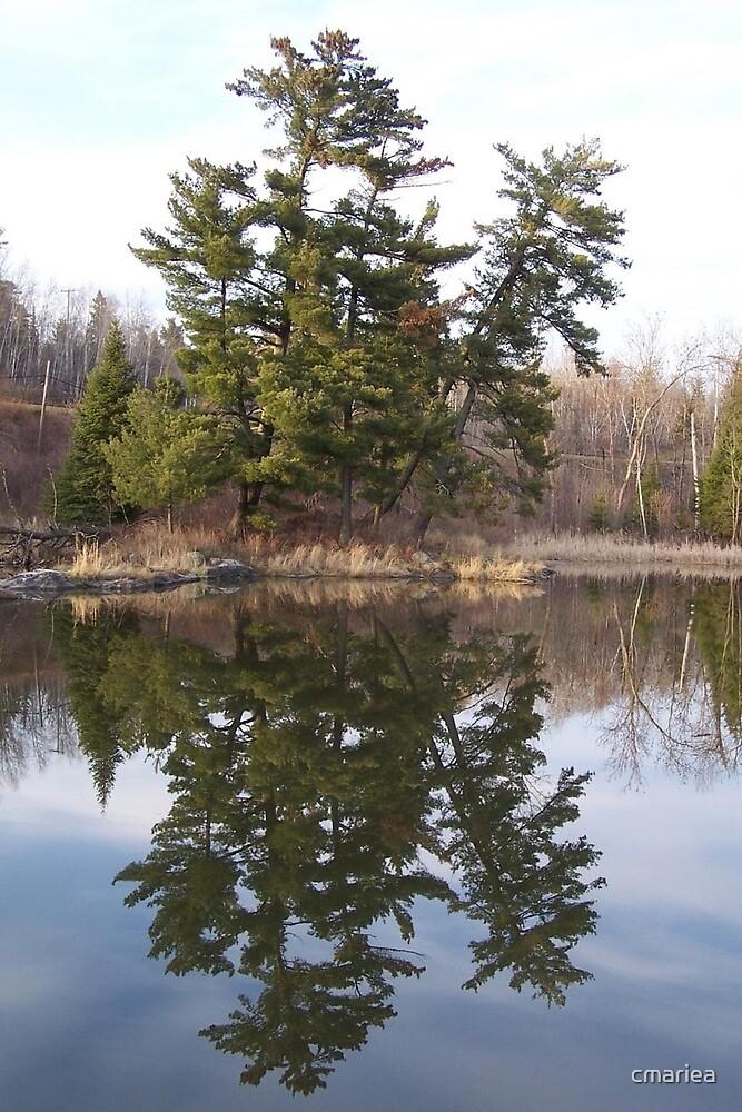 Reflecting  by cmariea