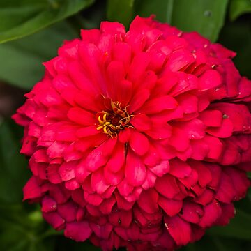 Bright Red Flower by tcausley