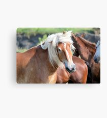 Bad Hair Day 8024 Canvas Print
