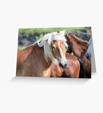 Bad Hair Day 8024 Greeting Card