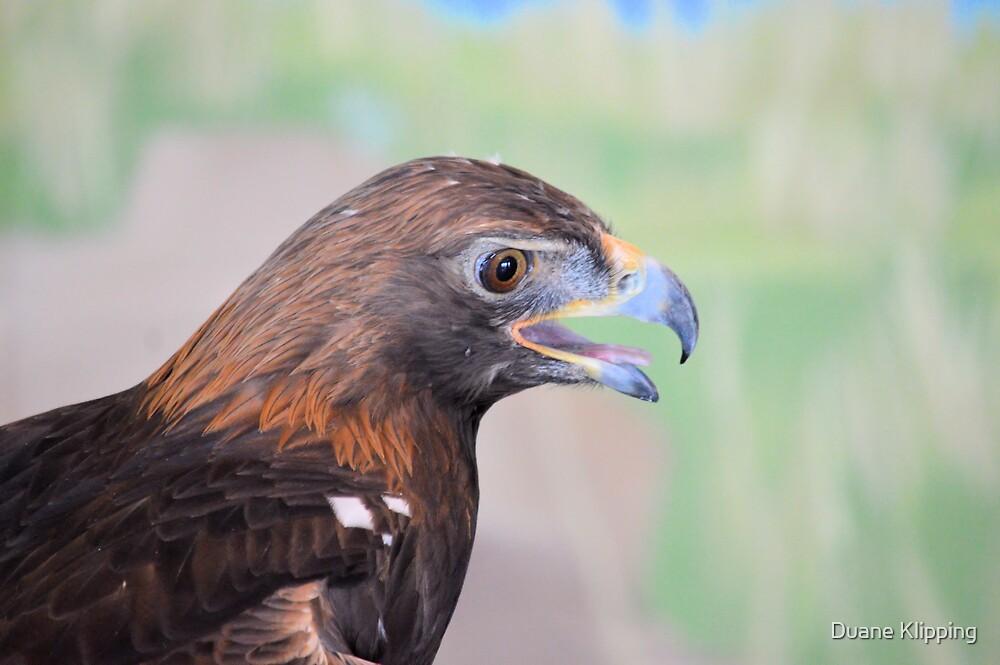 Golden Eagle 7595 by Duane Klipping