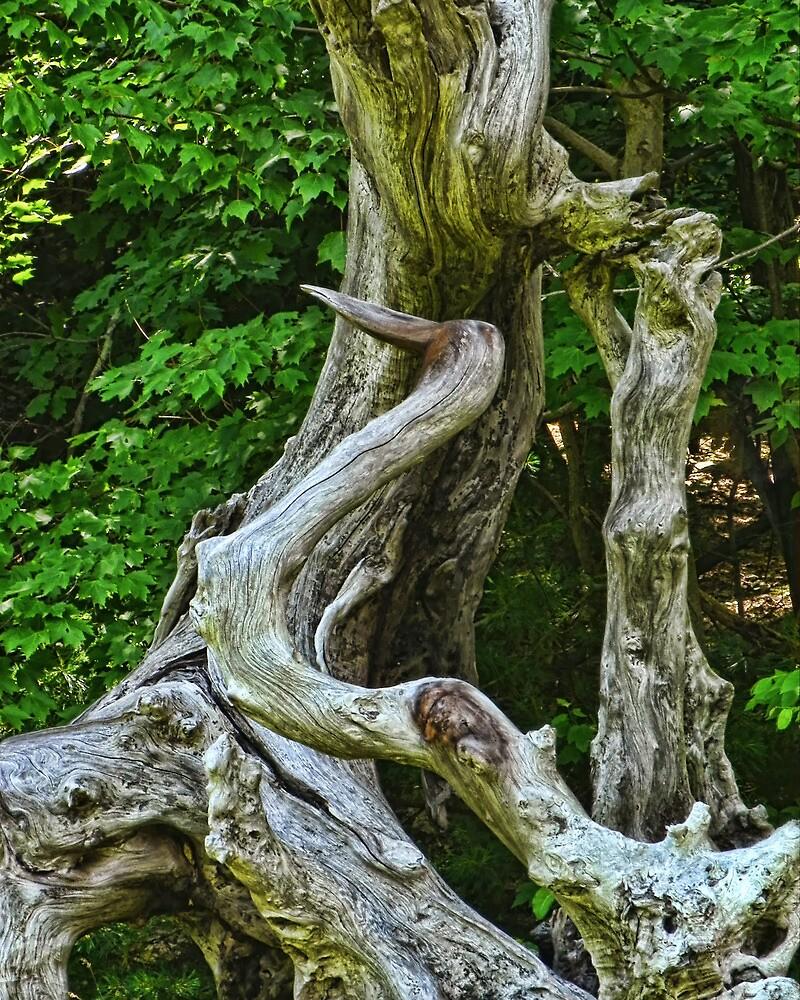 Heron Driftwood by PineSinger