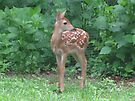 My New Fawn by Ginny York