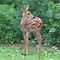 Wildlife Baby