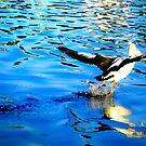 Prancing Pelican by jesskato