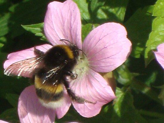 bumble bee by Cerys  Jones