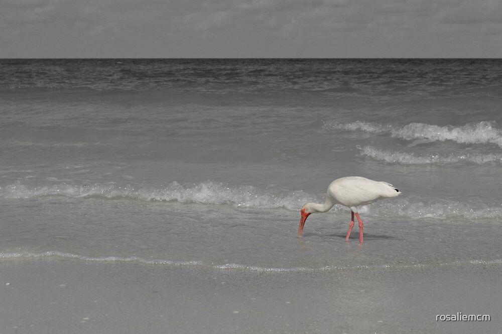 The Lonely Bird by rosaliemcm