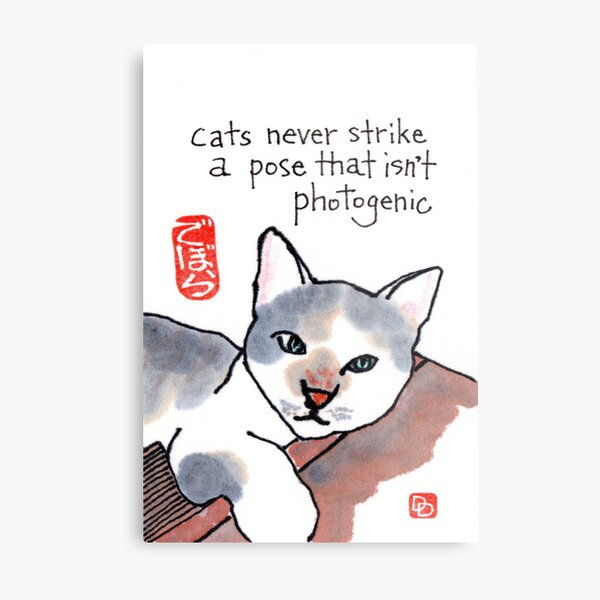 Photogenic Cat Metal Print