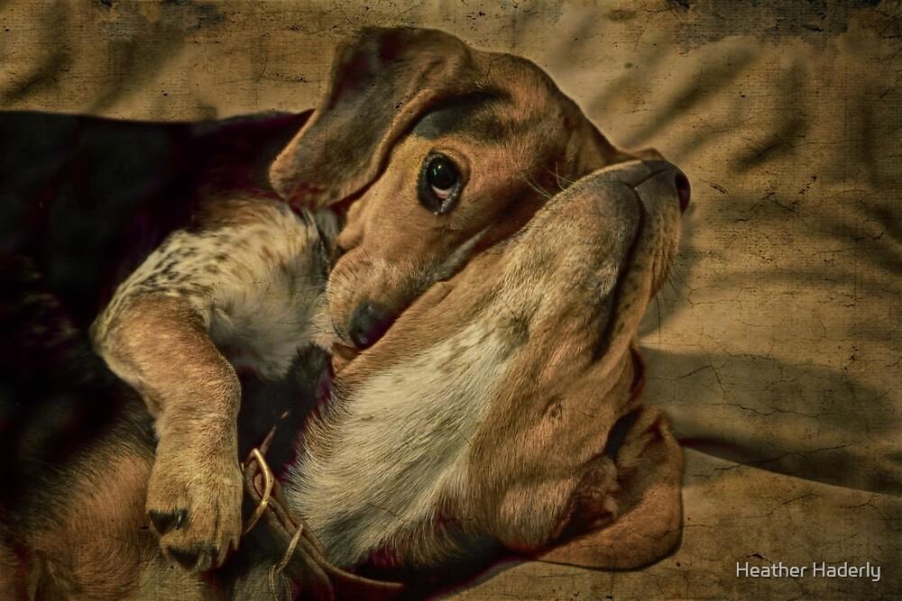 Snugglebunnies by Heather Haderly