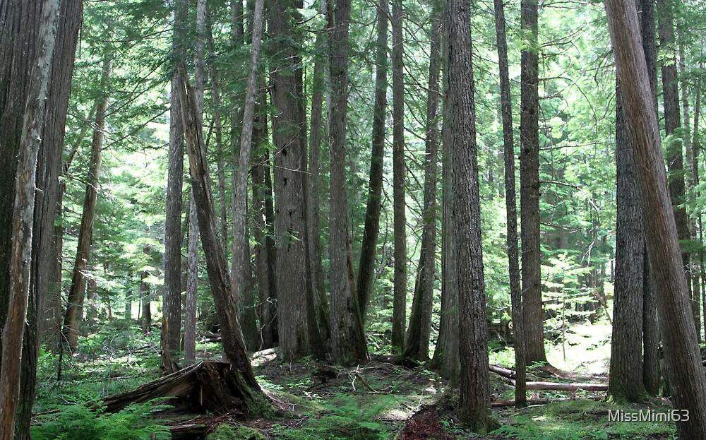 Ross Creek Gaint Cedars Montana by MissMimi63