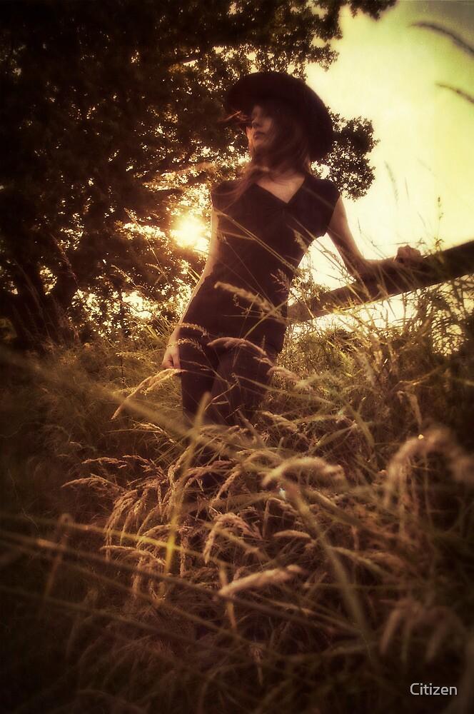 Sunset Serenade by Nikki Smith