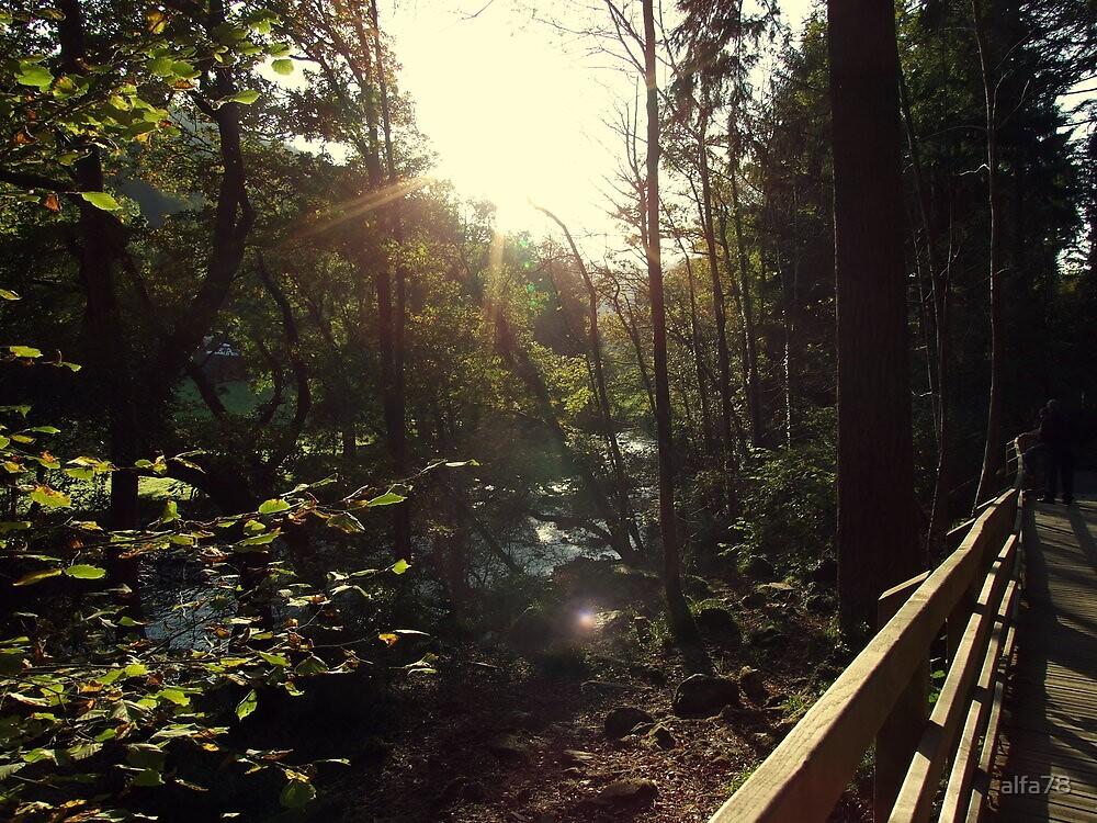 Sun through trees by alfa78