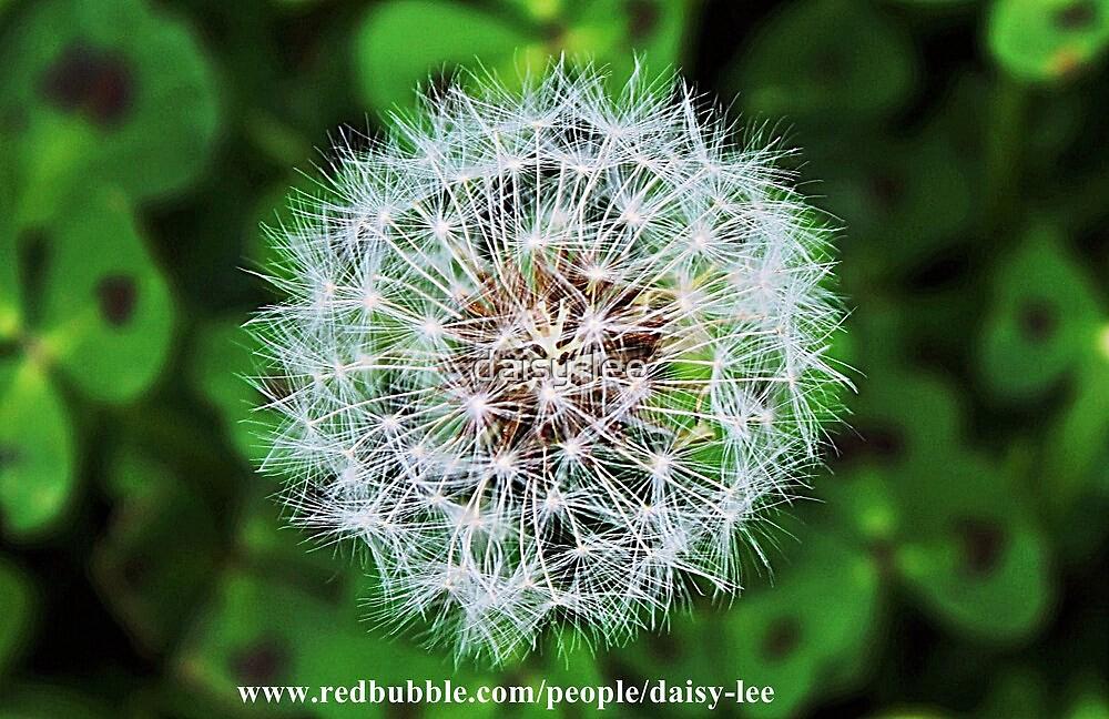 Dandelion 1 by daisy-lee