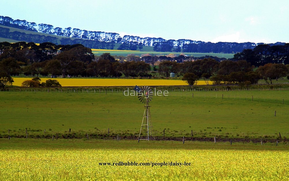 Canola field 1 by daisy-lee