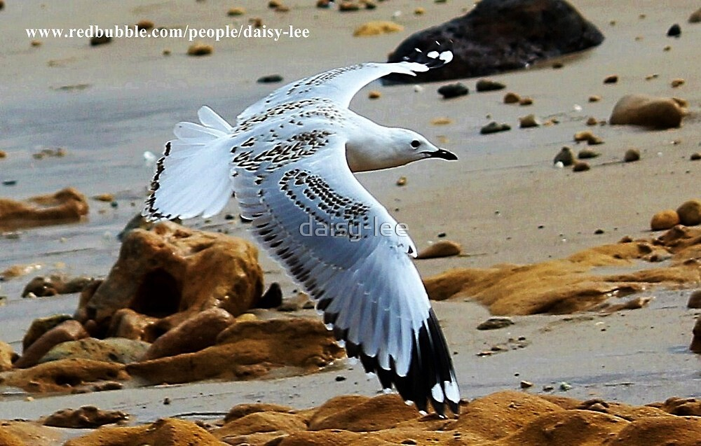Seagull with patterned wings  by daisy-lee